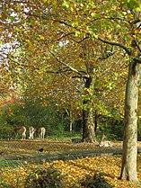 Zoo Berlin Herbst 2.jpg
