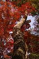 Zuihoji park04s3872.jpg