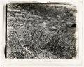 """Benvenuto,"" Robert Pim Butchart house, 800 Benvenuto Lane, Central Saanich, British Columbia, Canada. Rock garden plantings LCCN2008676017.tif"