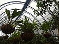(Jardín Botánico de Quito) a2.JPG