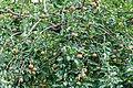 Äppel um Scheed, Ierpeldeng-102.jpg