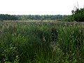 Відкрите еутрофне болото в заказнику Михайловичі в червні.jpg