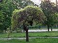 В парке 2 - panoramio.jpg