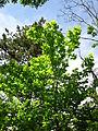 Гази Баба - Растителен свет (94).JPG