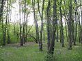 Дендрологічний парк 242.jpg