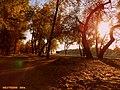 Залатая восень у Гомелі ... Golden Autumn in Gomel - panoramio.jpg