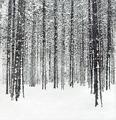 Зимний лес 1998г. офорт 32х30.tif