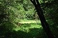 Лісове озеро в урочищі Боромля.jpg