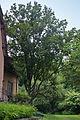 Магнолія на вул. Рудницького15.jpg