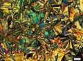 Микрокристаллы пиридила в скрещенных поляризаторах 2.jpg