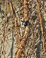 Муха на корнях.jpg