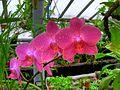 Орхидеи1.jpg