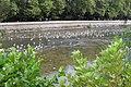 Река Сочи - panoramio.jpg