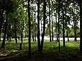 Роща - panoramio (5).jpg