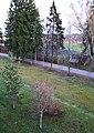 Царникава (Латвия) Городской стадион - panoramio.jpg