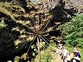 Цветок курая.jpg