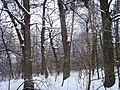 Чернечий Ліс 22.jpg