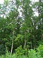 Чорний ліс1.JPG