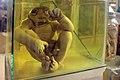 عمارت تیموری، موزه تاریخ طبیعی اصفهان - Natural History Museum of Isfahan 11.jpg