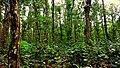 সিংড়া জাতীয় উদ্যান.jpg