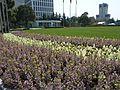 上海国际会议中心外的花园草坪 - panoramio.jpg