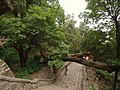 倒树 - Fallen Tree - 2012.06 - panoramio.jpg