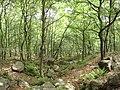 山林 - panoramio.jpg