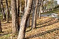 幽林舞蝶 - panoramio.jpg