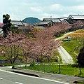 御所市井戸にて Cherry blossoms in Ido 2012.4.07 - panoramio.jpg