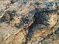 煤、原油等地(水)下可燃烧物的形成过程3.jpg