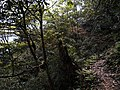 爬元宝山最高点收揽一路风光-桂穿越 - panoramio (92).jpg
