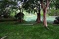 紅樹林酒店 Mangrove Tree Resort - panoramio.jpg