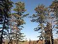 02 Parc del Castell de Montesquiu.jpg