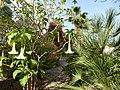 03570 La Vila Joiosa, Alicante, Spain - panoramio.jpg