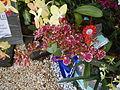 05525jfMidyear Philippine Orchid Show Circle Quezon Cityfvf 25.JPG
