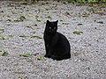 065-Barcelona-Cat-1.jpg