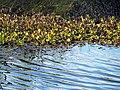 08 Bennetts Point RD Green Pond SC 6835 (12397286985).jpg