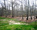 1000 Oaks Woods - panoramio.jpg