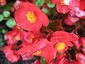 1299 - Zell am See - Flowers.JPG