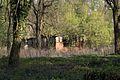 1462viki Cmentarz żydowski przy ul. Lotniczej. Foto Barbara Maliszewska.jpg