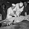 18.05.76 à l'école vétérinaire de Toulouse, opération d'un brocard jeune cerf (1976) - 53Fi887.jpg