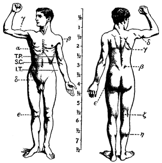 Human musculoskeletal system Organ system that gives humans the ability to move by using their muscular and skeletal systems