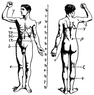 Human musculoskeletal system - Image: 1911 Britannica Anatomy Muscular