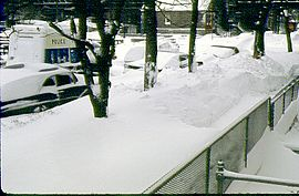 Snow to height of front yard fence, covering sidewalk and parkway trees