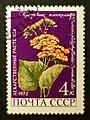 1972. Крестовник плоксолистный Soviet stamp 4k.jpg