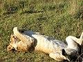 200812 kenya-155 (3213120229).jpg