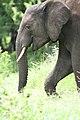 20090507-TZ-NGO Safari 354 (4677425603).jpg