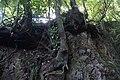 2012-10-26 13-23-00 Pentax JH (49282350076).jpg