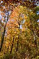 2012 Fall Color in the Chattahoochee National Forest (8113837129).jpg