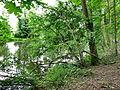 20140526 NSG-Nr 2-096 Enztal Niefern-Mühlackerl 049.jpg